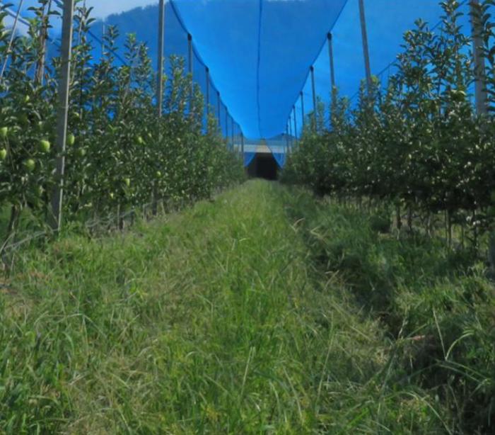 果园防护系统